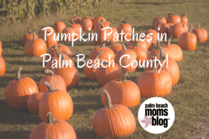 Pumpkin Patches in Palm Beach County!