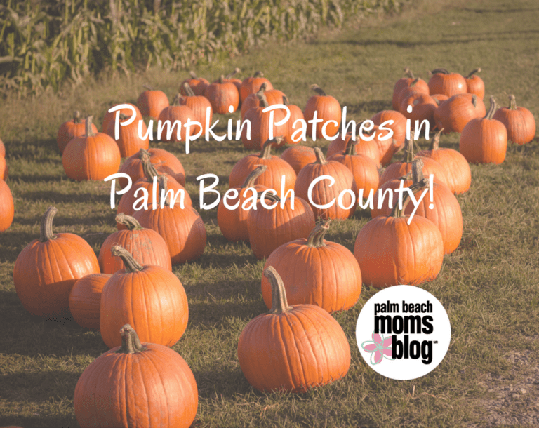 Our Favorite Pumpkin Patches in Palm Beach County!