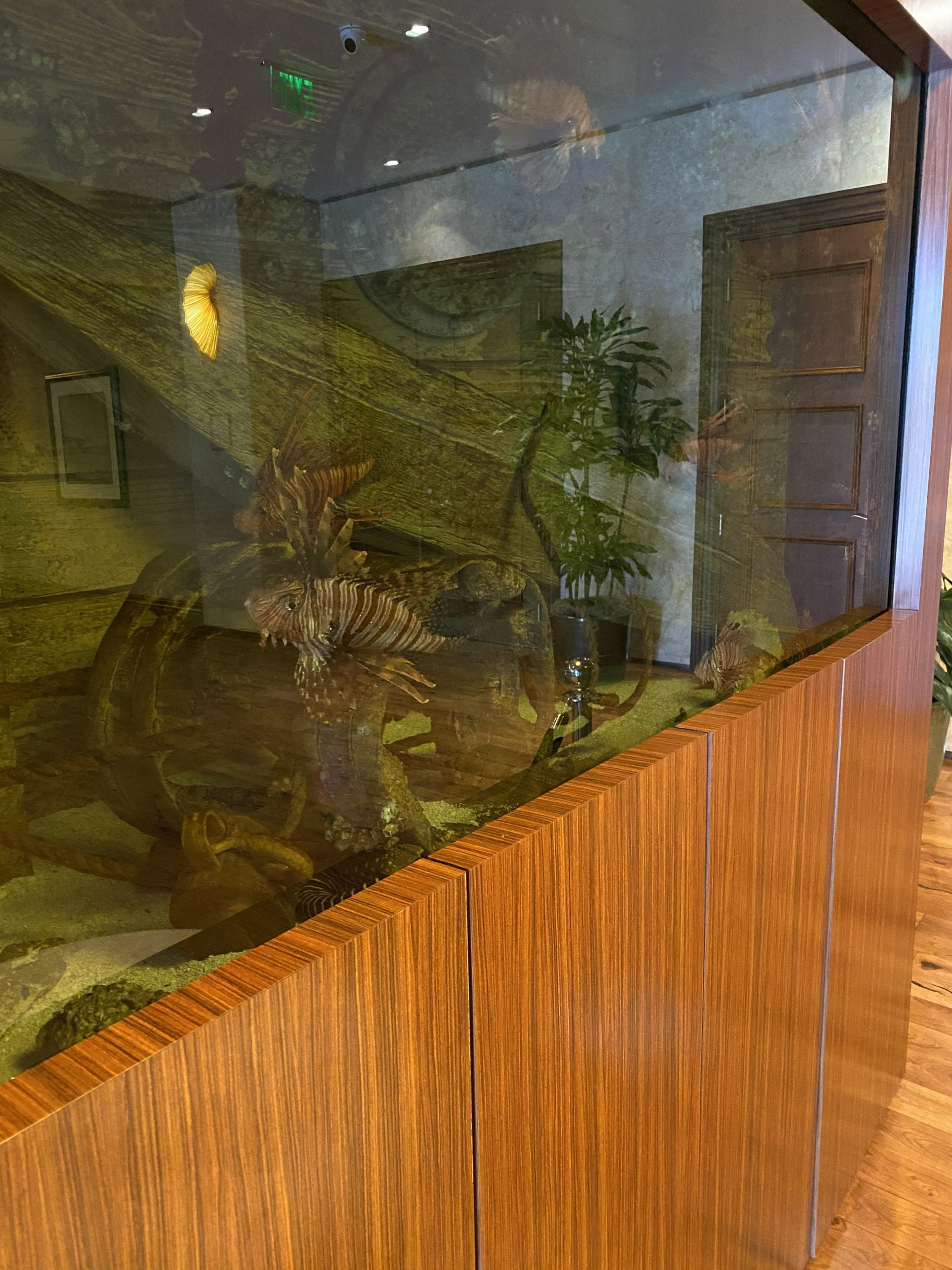 Seagate fish tank