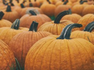 Pumpkin Patch Guide 2020